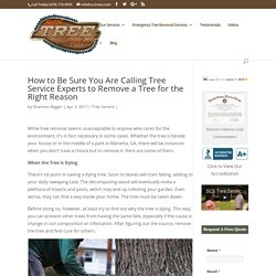 How to Be Sure You Are Calling Tree Service Experts to Remove a Tree for the Right Reason