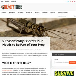 5 Reasons Why Cricket Flour Needs to Be Part of Your Prep