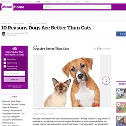 10 Reasons Dogs Are Better Than Cats