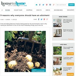 9 reasons why everyone should have an allotment