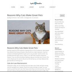 Reasons Why Cats Make Great Pets - Lynda Hamblen