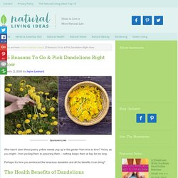 25 Reasons To Go & Pick Dandelions Right Now