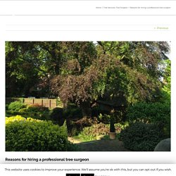 Reasons for hiring a professional tree surgeon