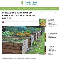 14 Reasons Why Raised Beds Are The Best Way to Garden