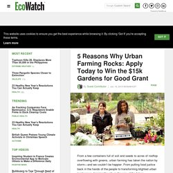 5 Reasons Why Urban Farming Rocks: Apply Today to Win the $15k Gardens for Good Grant