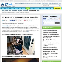 10 Reasons Why My Dog Is My Valentine | PETA.org - StumbleUpon