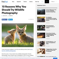 10 Reasons Why You Should Try Wildlife Photography