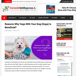 Reasons Why Yoga With Your Dog (Doga) Is Beneficial?