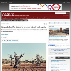 NATURE 07/06/17 Italy rebuked for failure to prevent olive-tree tragedy - European Commission reveals widespread delays by the country's authorities to halt spread of deadly plant disease.