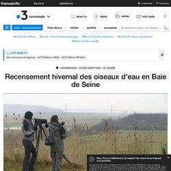 Recensement hivernal des oiseaux d'eau en Baie de Seine - France 3 Normandie