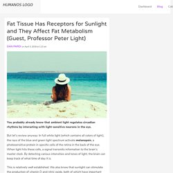 Fat Tissue Has Receptors for Sunlight and They Affect Fat Metabolism (Guest, Professor Peter Light)