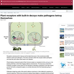Plant receptors with built-in decoys make pathogens betray themselves