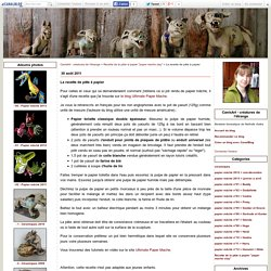 La recette de pâte à papier - CanisArt - créatures de l'étrange