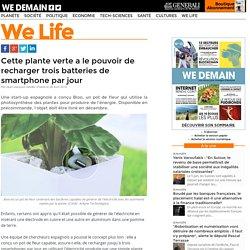 Cette plante verte a le pouvoir de recharger trois batteries de smartphone par jour