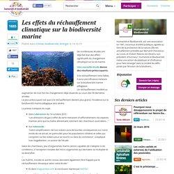 Les effets du réchauffement climatique sur la biodiversité marine