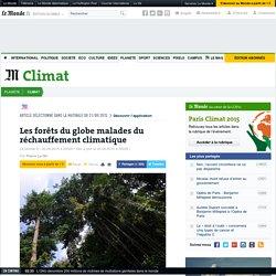 Les forêts du globe malades du réchauffement climatique