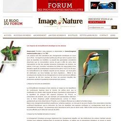 Les impacts du r�chauffement climatique sur les oiseaux - Actualit�s