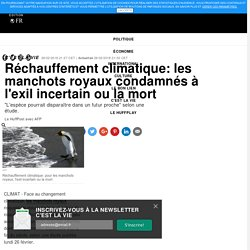 Réchauffement climatique: les manchots royaux condamnés à l'exil incertain ou la mort