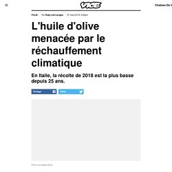VICE 07/03/19 L'huile d'olive menacée par le réchauffement climatique - En Italie, la récolte de 2018 est la plus basse depuis 25 ans.