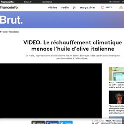 BRUT 11/03/19 VIDEO. Le réchauffement climatique menace l'huile d'olive italienne