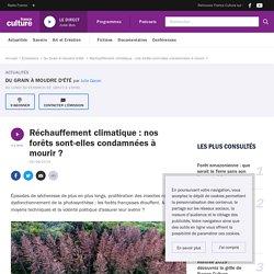 FRANCE CULTURE 06/08/19 DU GRAIN A MOUDRE - Réchauffement climatique : nos forêts sont-elles condamnées à mourir?