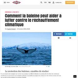 Comment la baleine peut aider à lutter contre le réchauffement climatique