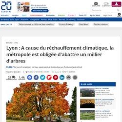 Lyon : A cause du réchauffement climatique, la métropole est obligée d'abattre un millier d'arbres