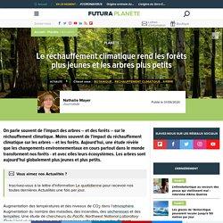 FUTURA 01/06/20 Le réchauffement climatique rend les forêts plus jeunes et les arbres plus petits