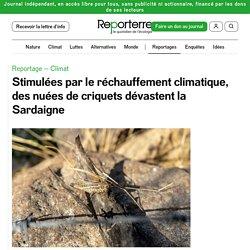 REPORTERRE 17/07/20 Stimulées par le réchauffement climatique, des nuées de criquets dévastent la Sardaigne