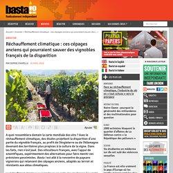 Réchauffement climatique : ces cépages anciens qui pourraient sauver des vignobles français de la disparition