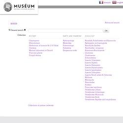 Bases de données de collections