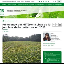 ITB 19/11/20 Prévalence des différents virus de la jaunisse de la betterave en 2020