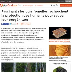Fascinant : les ours femelles recherchent la protection des humains pour sauver leur progéniture