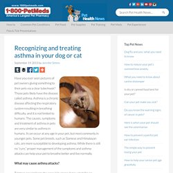 Recognizing and treating asthma in your dog or cat