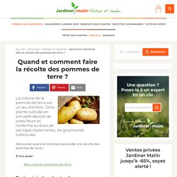 Récolte des pommes de terre : quand et comment ?