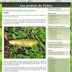 40. Récolte des graines de concombre - Felice Olivesi, paysagiste DPLG