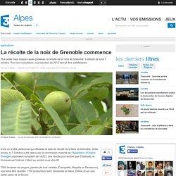 La récolte de la noix de Grenoble commence - France 3 Alpes