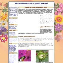 Récolte des semences et graines de fleurs