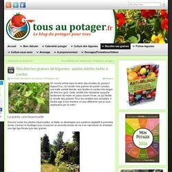 Récolter les graines de légumes : poirée, blette, bette à cardes