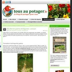 Récolter les graines de légumes : cresson