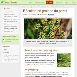 Récolter les graines de persil