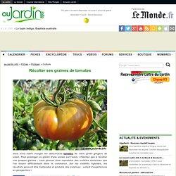 Récolter ses graines de tomates