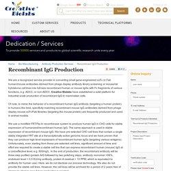 Recombinant IgG Production