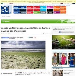 Algues vertes: les recommandations de l'Anses pour ne pas s'intoxiquer