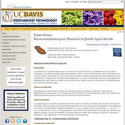 UNIVERSITY OF CALIFORNIA - Patate Douce: Recommandations pour Maintenir la Qualité Après Récolte