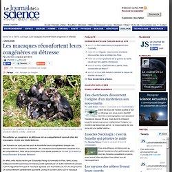 Les macaques réconfortent leurs congénères en détresse › Zoologie