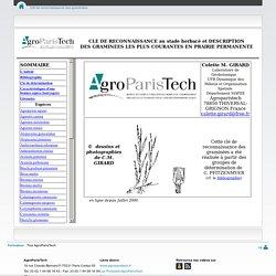 Clé de reconnaissance des graminées - Cours en Ligne - AgroParisTech