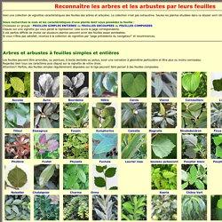 reconnaissance des arbres par les feuilles