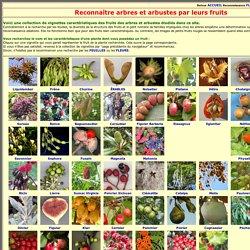 Reconnaissance des arbres par leurs fruits