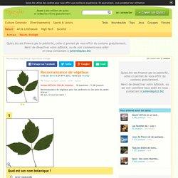 Quizz Reconnaissance de végétaux - Quiz Plantes, Arbres, Jardin